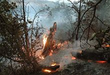 Iran -- a forest fire in Golestan Province, August 2006