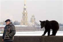 Russia -- Bear on the Neva River bank with Peter And Paul Fortress in background, St. Petersburg, undated