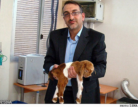 http://www.payvand.com/news/09/apr/Hana-cloned-goat-by-Royan-Institute-Iran1.jpg