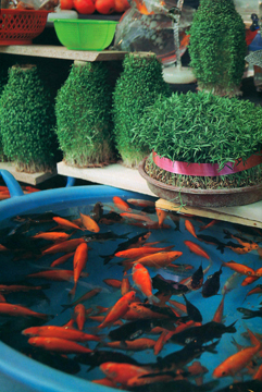 greens and gold fish for Norouz